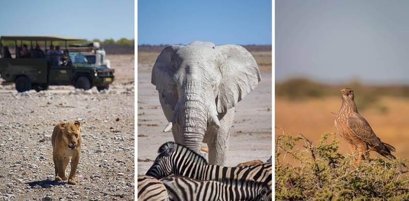 Animais vistos no safári na África