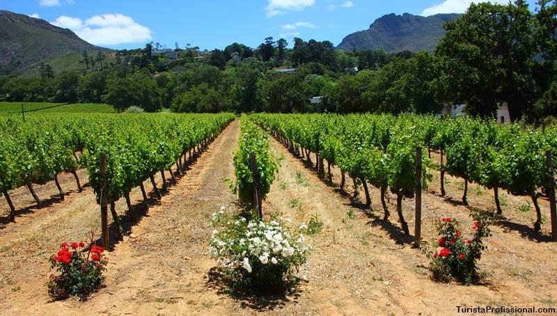produção de vinhos da África do Sul