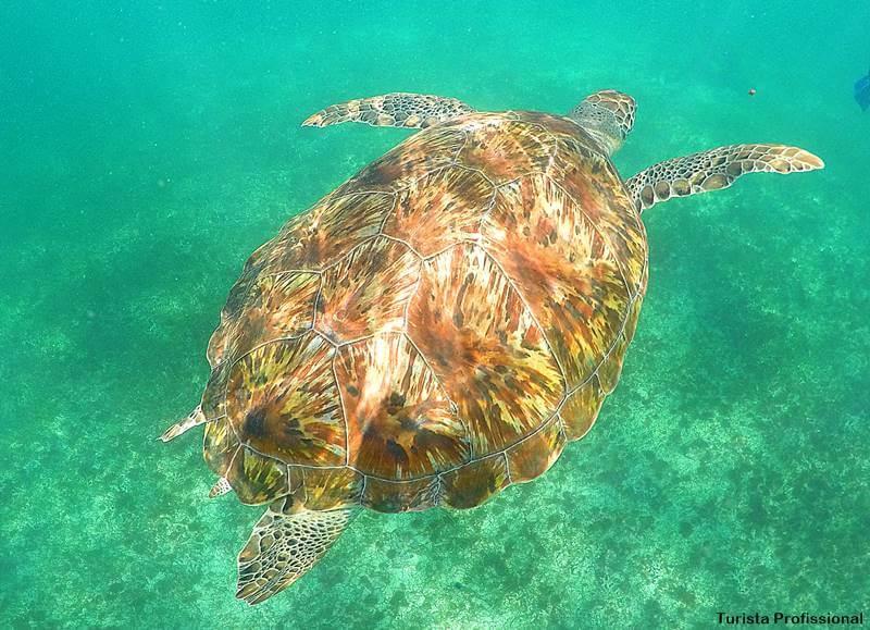mergulho com tartarugas - Dicas de Tulum: o sítio maia à beira-mar!