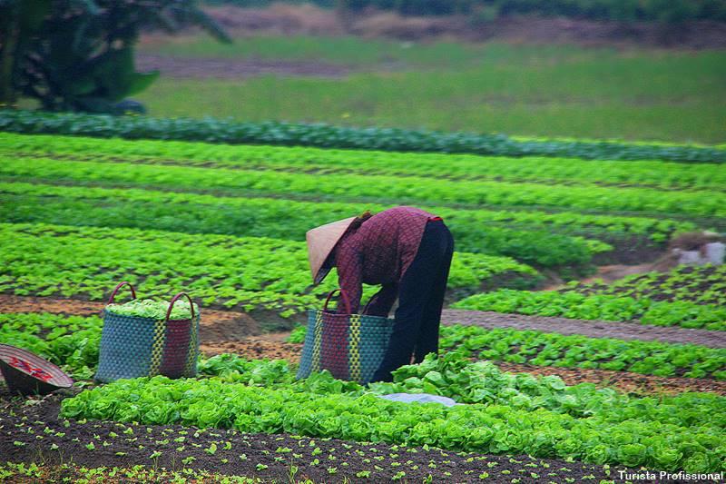 Agricultores do Vietnã