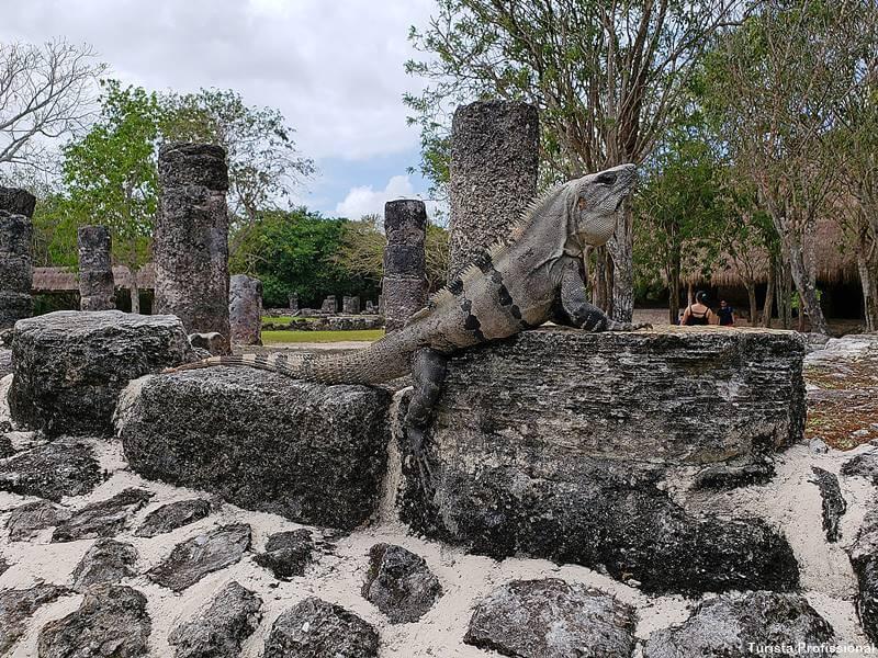 lagartos em cozumel - Como chegar e o que fazer em Cozumel, México