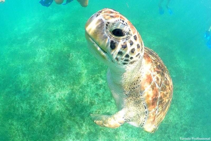 mergulhar com tartarugas