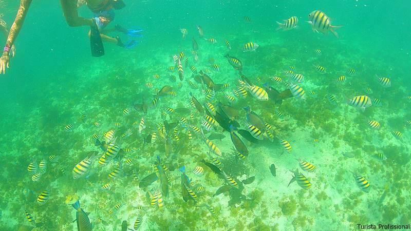 mergulho em isla mujeres - Como chegar e o que fazer em Isla Mujeres