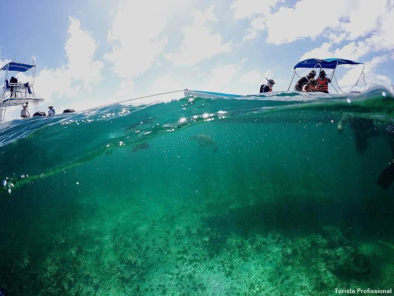 mergulho no mexico - Como chegar e o que fazer em Isla Mujeres