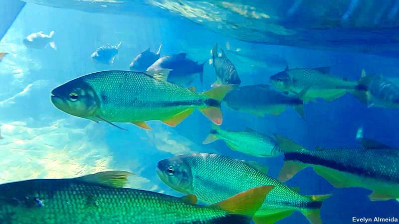 mergulho de snorkel em Nobres - Nobres ou Bonito: qual é mais bonito?