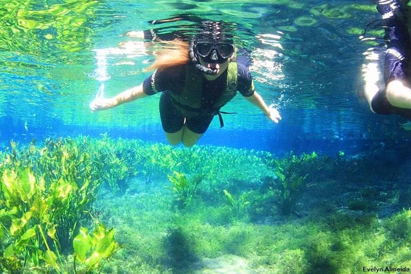 mergulho no Aquario Natural em Bonito - Nobres ou Bonito: qual é mais bonito?