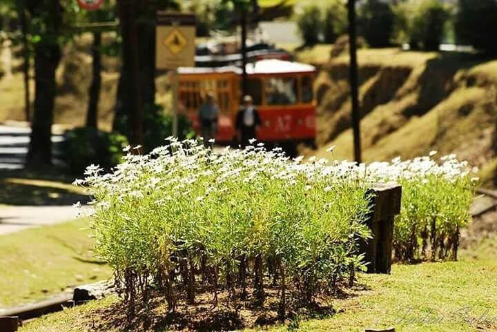 primavera em campos do jordao - O que fazer em Campos do Jordão em qualquer época do ano