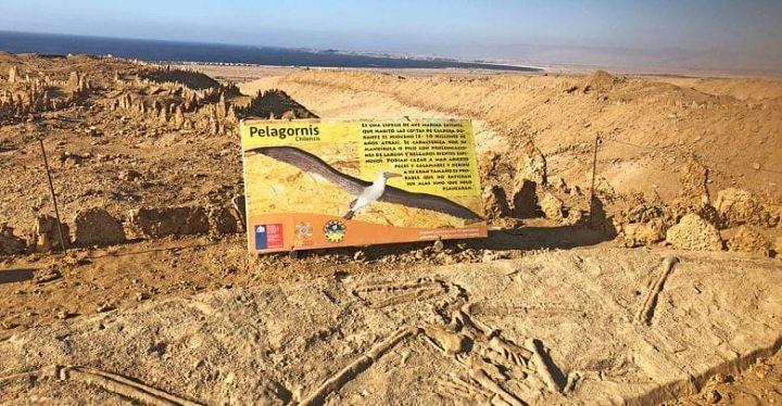Parque Paleotológico los Dedos no Chile
