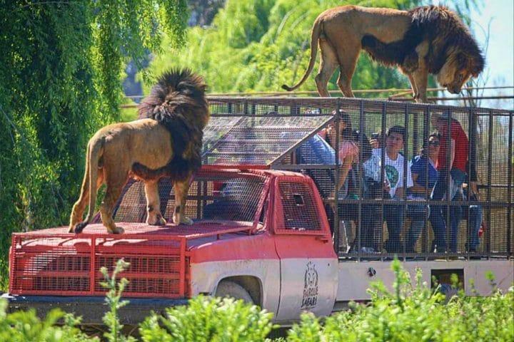 Parque Safari no Chile