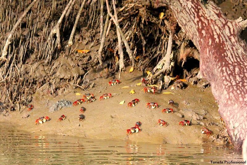 caranguejos do mangue - Delta do Parnaíba: passeio de barco e revoada dos guarás