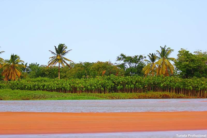 o que fazer no Delta do Parnaiba - Delta do Parnaíba: passeio de barco e revoada dos guarás