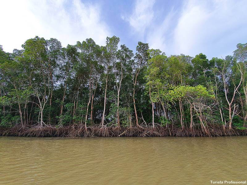 passeio no delta do parnaiba - Delta do Parnaíba: passeio de barco e revoada dos guarás