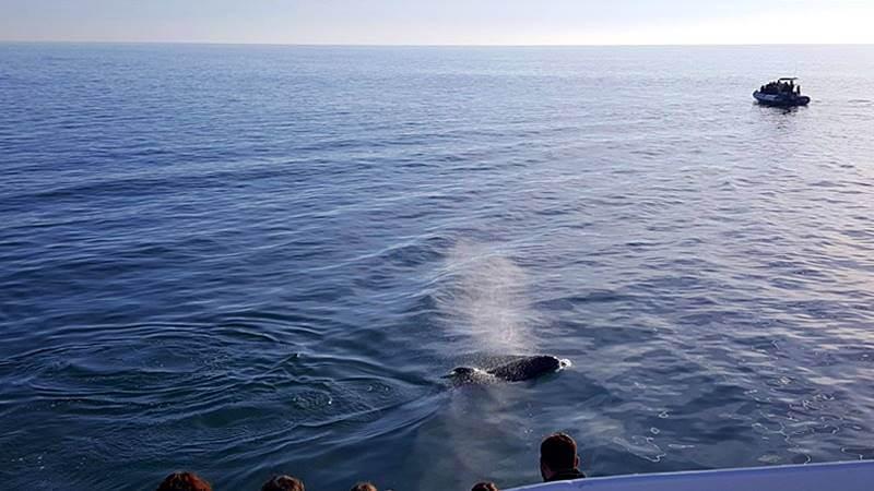 observação de golfinhos em `Portugal