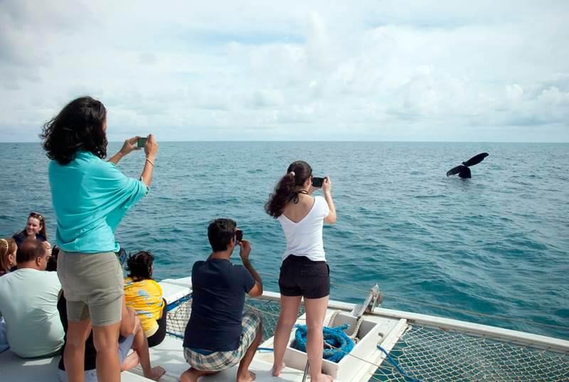 baleias jubarte em prado - Sorria dobrado, você está em Prado, Bahia!