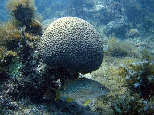 corais em abrolhos - Sorria dobrado, você está em Prado, Bahia!