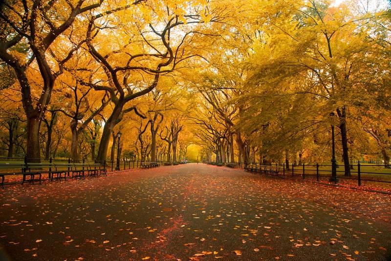 foliage central park - Outono em Nova York