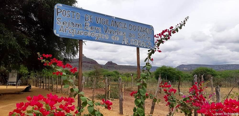 cactos da caatinga - Vale do Catimbau, PE