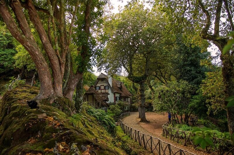 floresta laurissilva ilha da madeira - 16 curiosidades da Ilha da Madeira