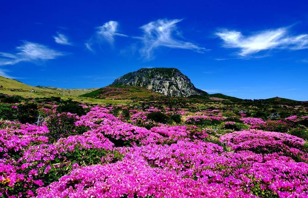 ilha de jeju - 20 Pontos Turísticos da Coreia do Sul