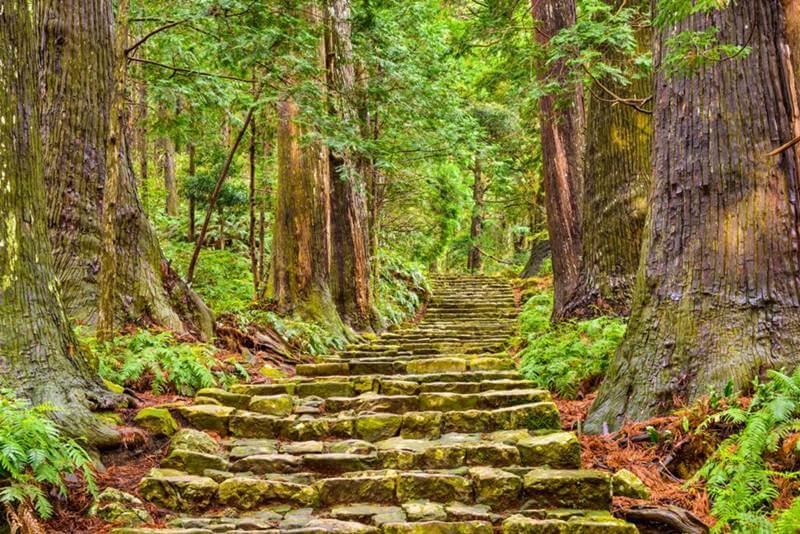 banho de floresta japao Kumano - Banho de Floresta, conheça esta terapia japonesa